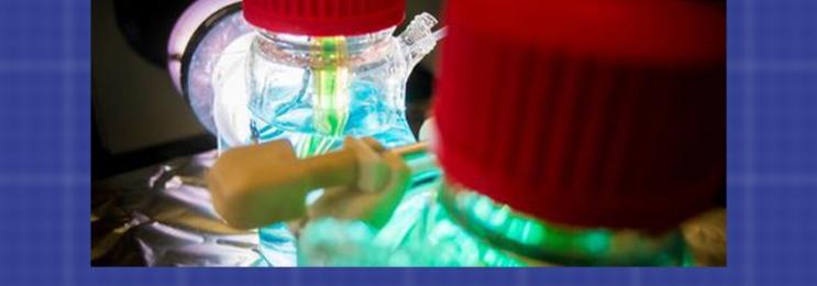 ساخت میکروچیپهایی که برق بیولوژیک تولید میکنند
